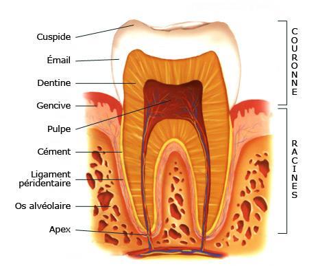 Causas del dolor molar: hipersensibilidad dental