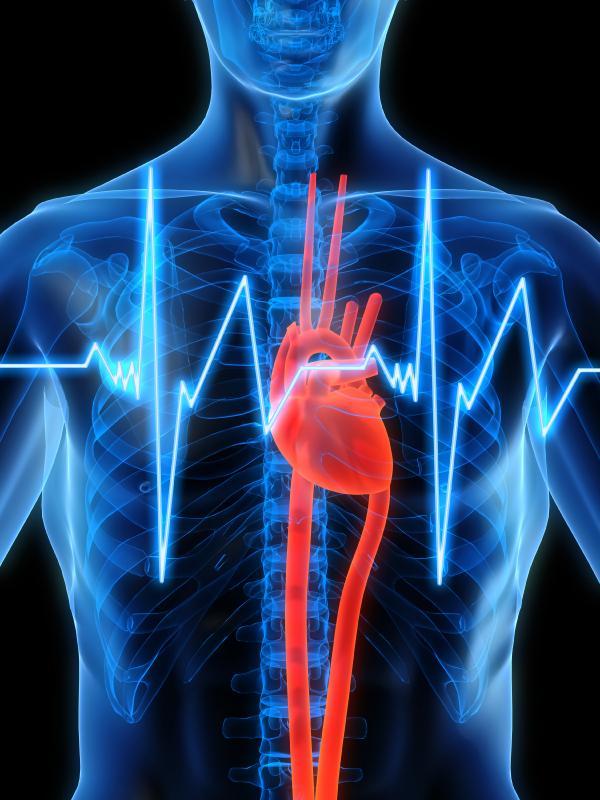 Cómo reducir los adipocitos - Las soluciones - Entrenamiento cardiovascular