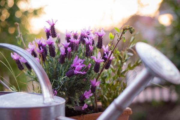 5 cosas extrañas que ponen a los hombres extremadamente cachondos: el olor a lavanda o vainilla